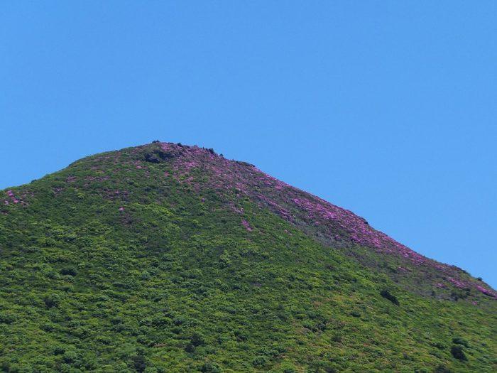 ピンクに染まり始めた平治岳北峰