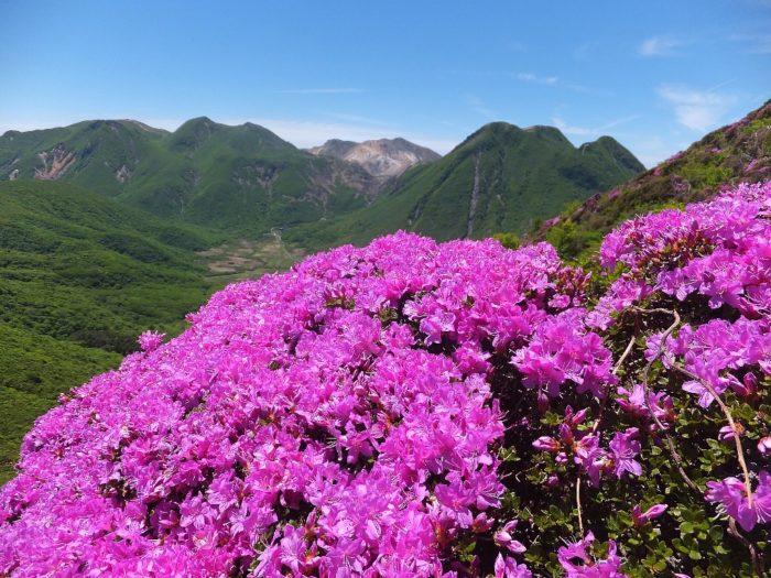 平治岳のミヤマキリシマとくじゅう連山