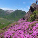 平治岳のミヤマキリシマと三俣山