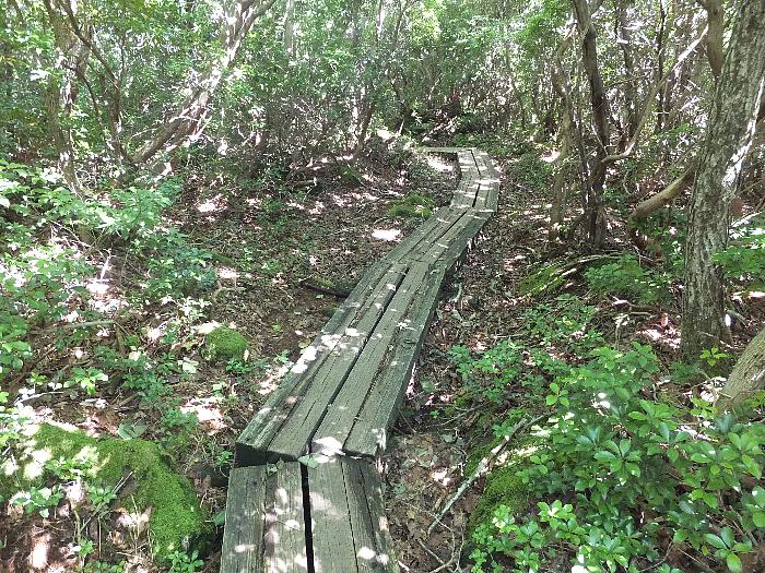 鉾立峠へ向かう登山道
