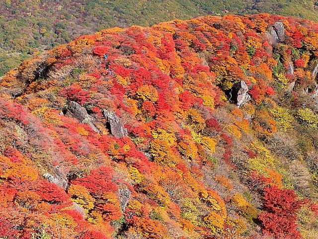 三俣山 小鍋の紅葉