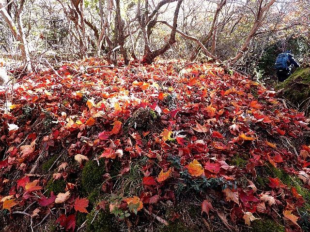 大船山の紅葉