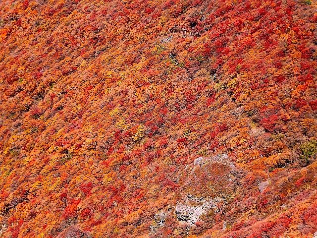 大船山 段原の紅葉