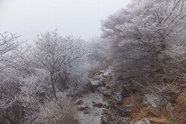 くじゅう 霧氷