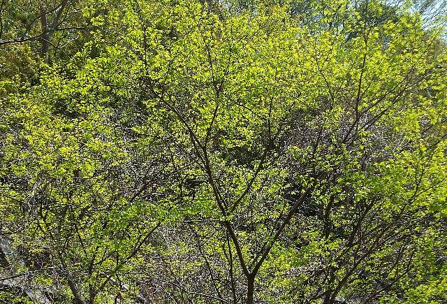 経塚山の新緑