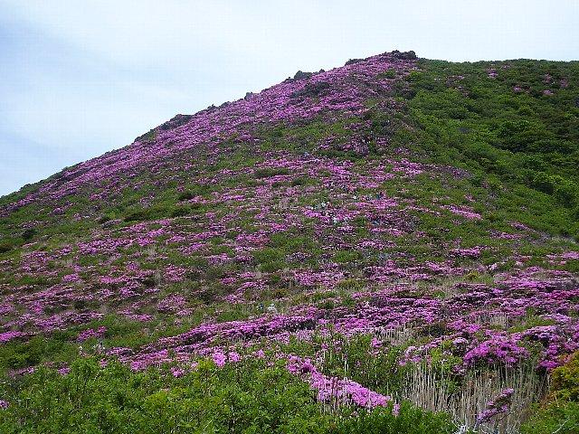 大戸越から仰ぎ見る平治岳 ミヤマキリシマ 2018年
