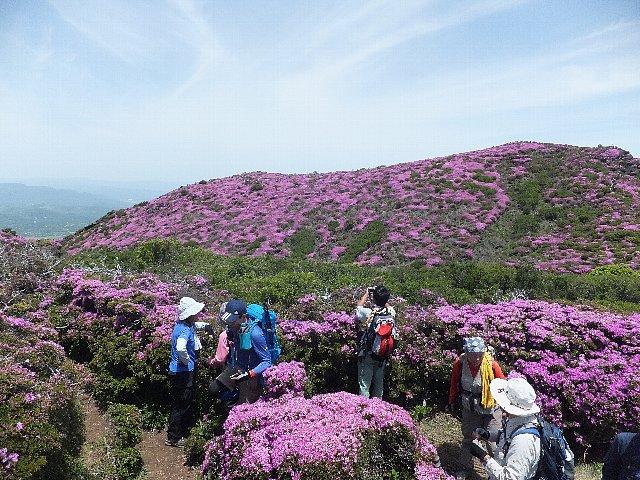 平治岳のミヤマキリシマ 2018年