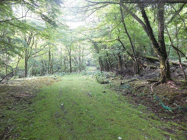 大船山4号集材路の自然林と苔
