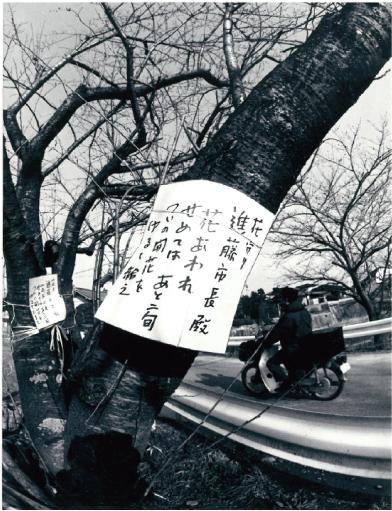 桧原桜にかけられたメッセージ