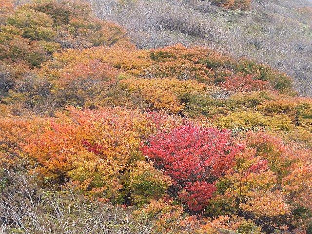 三俣山本峰山ろくの紅葉