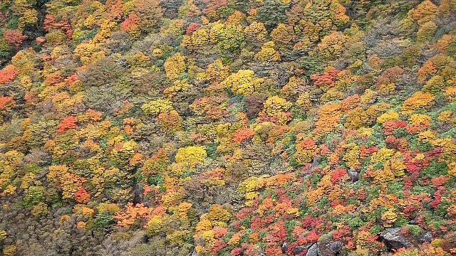 三俣山火口底から仰ぐ紅葉の彩り