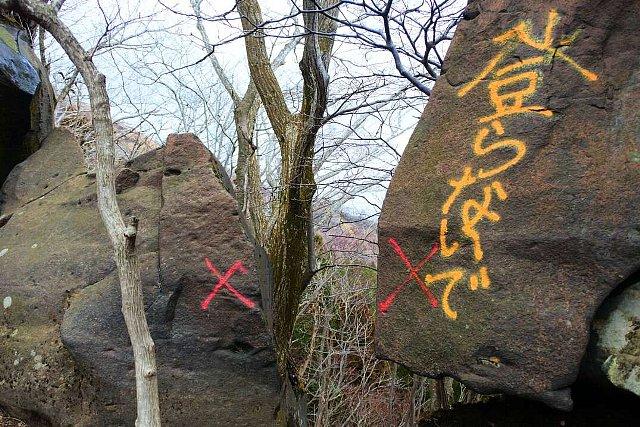 阿蘇・根子岳東峰大戸尾根登山道