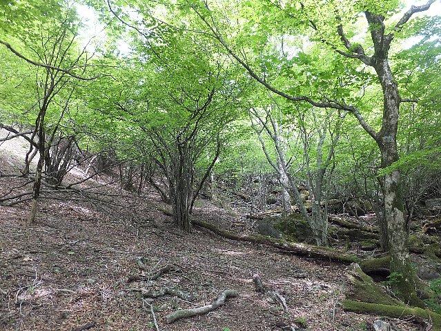 英彦山の新緑