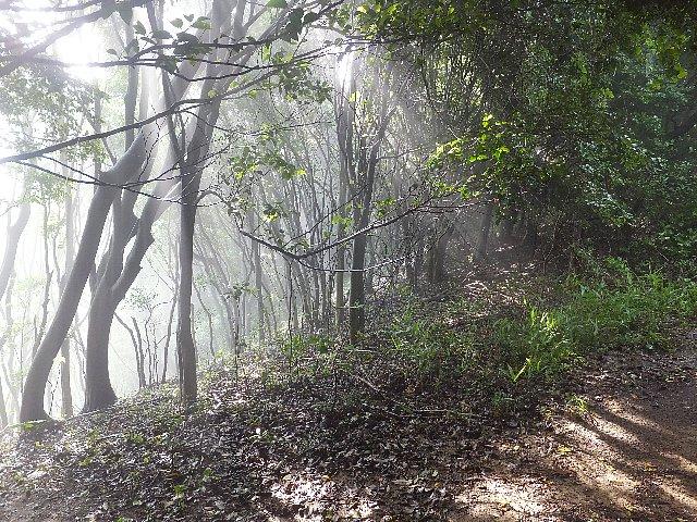 足立山 木洩れ日