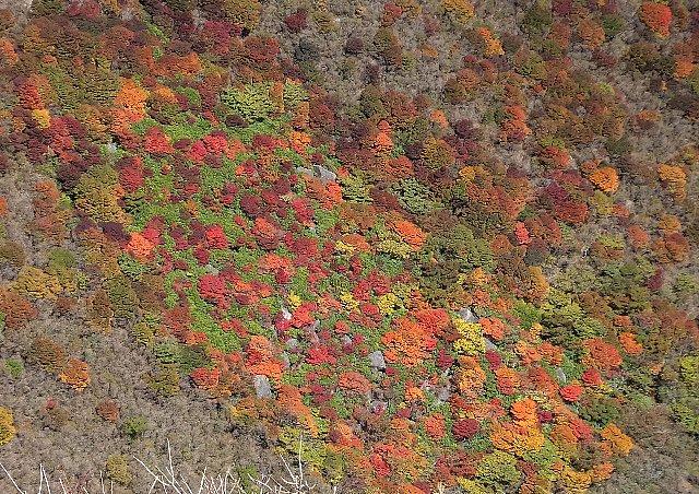三俣山大鍋の紅葉