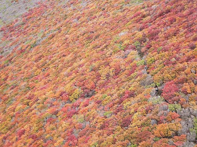 紅葉に染まる段原