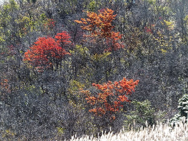 猟師岳の紅葉