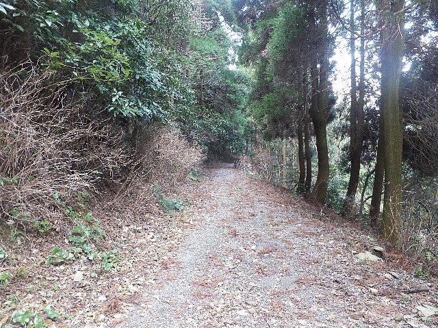 花尾山への登山道