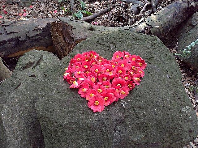 山椿の花で作ったハート