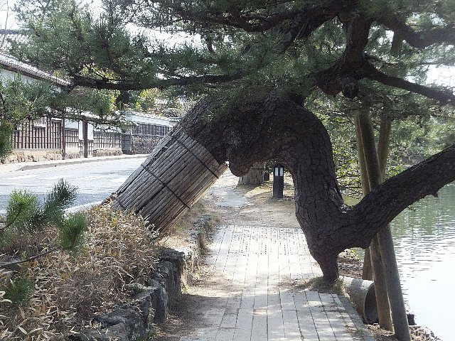 松江城 塩見縄手