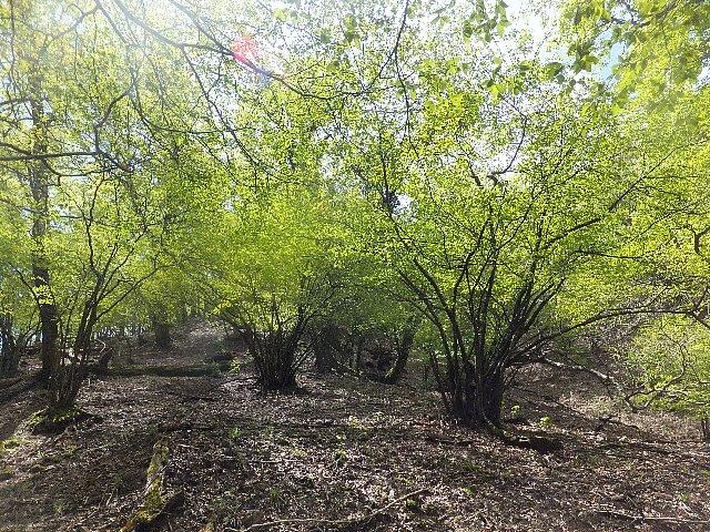 犬ヶ岳の新緑