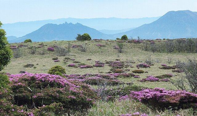 岩井川岳の草台地
